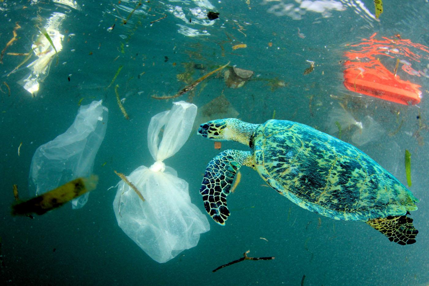 Sea turtle swimming amongst waste plastic